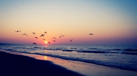 Birds At Sunset Photo Download