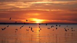 Birds At Sunset Photo Free