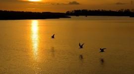 Birds At Sunset Photo Free#1
