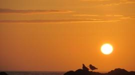 Birds At Sunset Photo#1