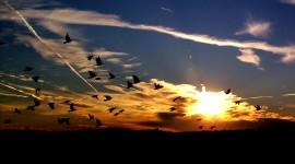 Birds At Sunset Wallpaper