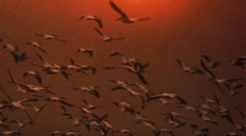 Birds At Sunset Wallpaper For IPhone