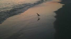 Birds At Sunset Wallpaper For Mobile