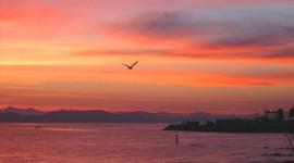Birds At Sunset Wallpaper Free