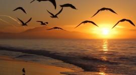 Birds At Sunset Wallpaper Full HD