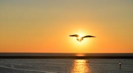 Birds At Sunset Wallpaper Gallery