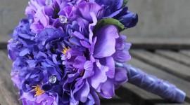 Carnation Purple Best Wallpaper