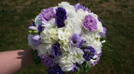 Carnation Purple High Quality Wallpaper