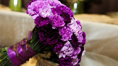 Carnation Purple wallpapers high quality