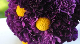 Carnation Purple Wallpaper