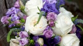 Carnation Purple Wallpaper Download