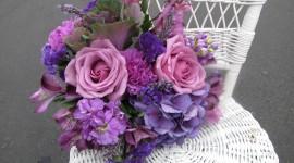 Carnation Purple Wallpaper Download Free