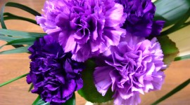 Carnation Purple Wallpaper For Desktop
