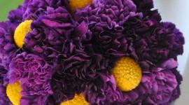 Carnation Purple Wallpaper Free