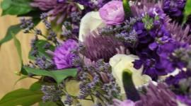 Carnation Purple Wallpaper Gallery