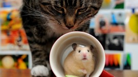 Cat And Mouse Photo Download