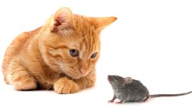 Cat And Mouse Wallpaper For Desktop