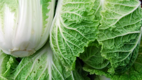 Chinese Cabbage wallpapers high quality