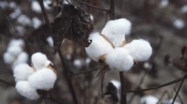 Cotton Wallpaper 1080p