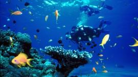 Diving Desktop Wallpaper For PC