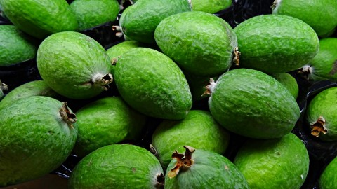 Feijoa wallpapers high quality