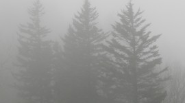 Fog In Smoky Mountains Wallpaper For IPhone