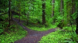 Forest Path Photo Download#1
