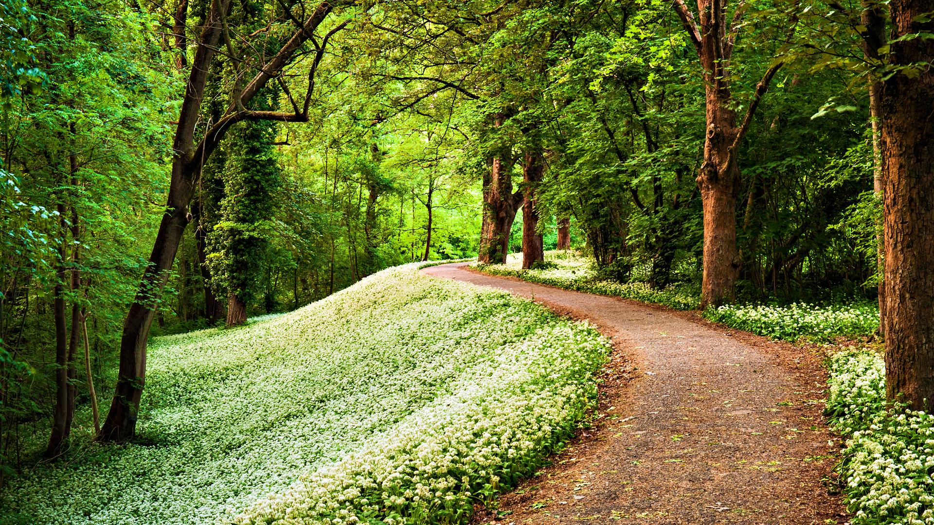 720p Wallpaper Hd 1080p 3d Nature