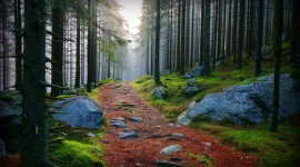 Forest Path Wallpaper Download