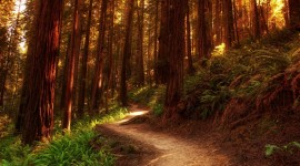 Forest Path Wallpaper Free