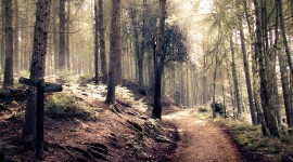 Forest Path Wallpaper Gallery