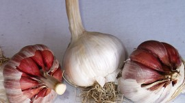 Garlic Wallpaper High Definition