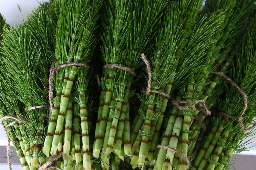 Horsetail wallpapers HD