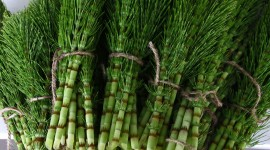 Horsetail High Quality Wallpaper