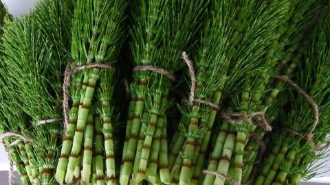 Horsetail wallpapers high quality