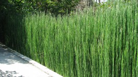 Horsetail Wallpaper Download Free