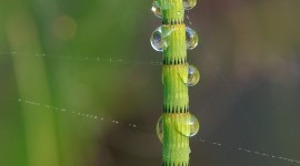 Horsetail Wallpaper For IPhone
