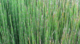 Horsetail Wallpaper For IPhone Download
