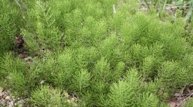 Horsetail Wallpaper Gallery