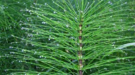 Horsetail Wallpaper High Definition