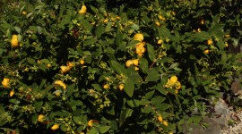 Hypericum Wallpaper Free