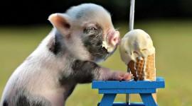 Ice Cream Animals Best Wallpaper