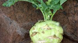 Kohlrabi Cabbage Wallpaper 1080p