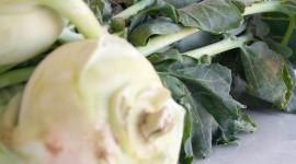 Kohlrabi Cabbage Wallpaper Free
