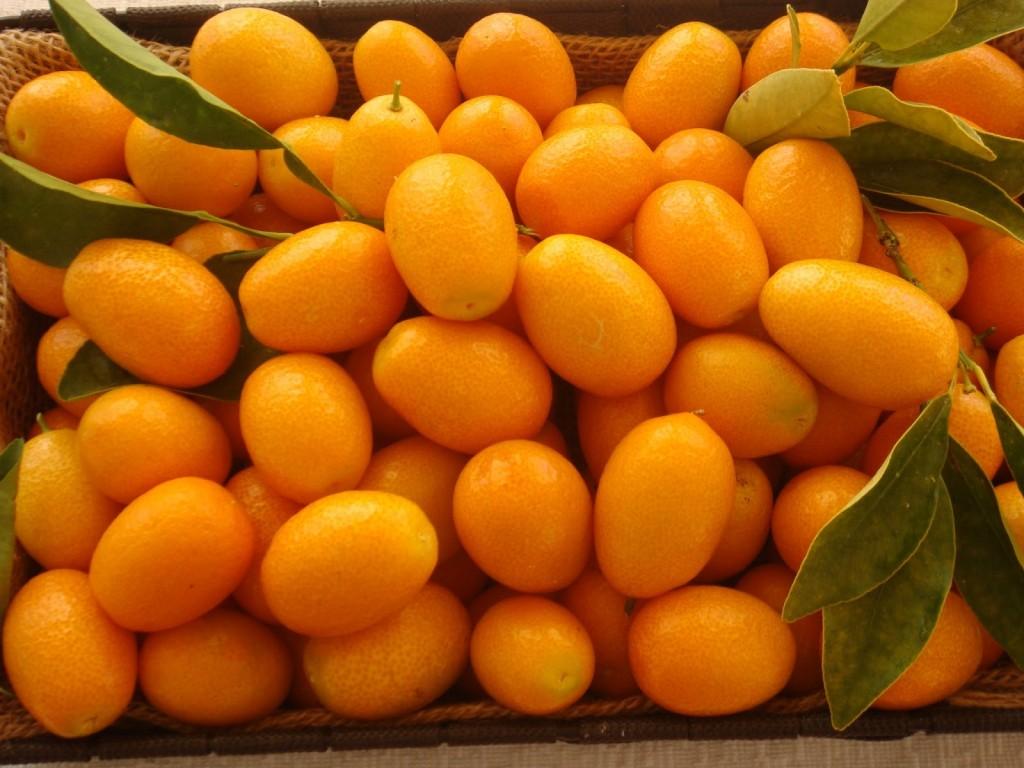 Kumquat wallpapers HD