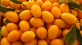 Kumquat Best Wallpaper