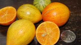 Kumquat Wallpaper For PC