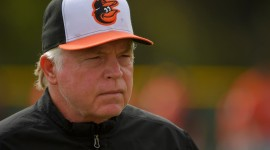 Orioles Photo Download