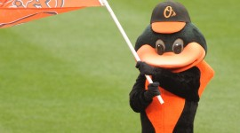 Orioles Wallpaper For IPhone
