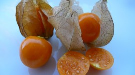 Physalis Best Wallpaper